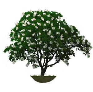 der geldbaum